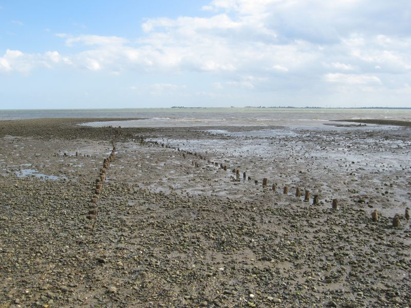 Posts in the mud about 200 yds East of Seaview Avenue, West Mersea, visible at low tide. They are believed by some, but not all, to be an Anglo-Saxon fish weir.