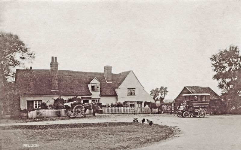 Peldon Rose. Postcard mailed October 1906.