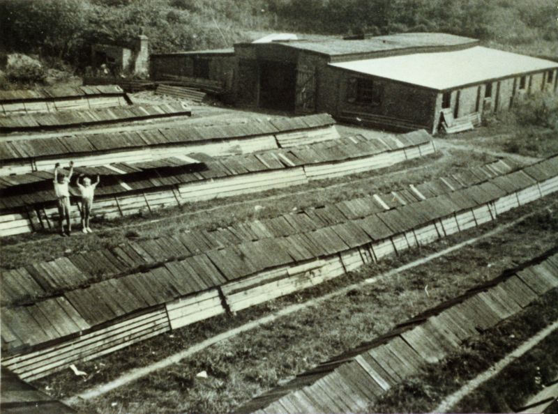 West Mersea Brickfields (the Brick Hill). The brickmaking shed and the hakes (foreground) for drying newly made bricks before burning. Arnold Gasson and friend. Photo taken from top of kiln looking northeast.