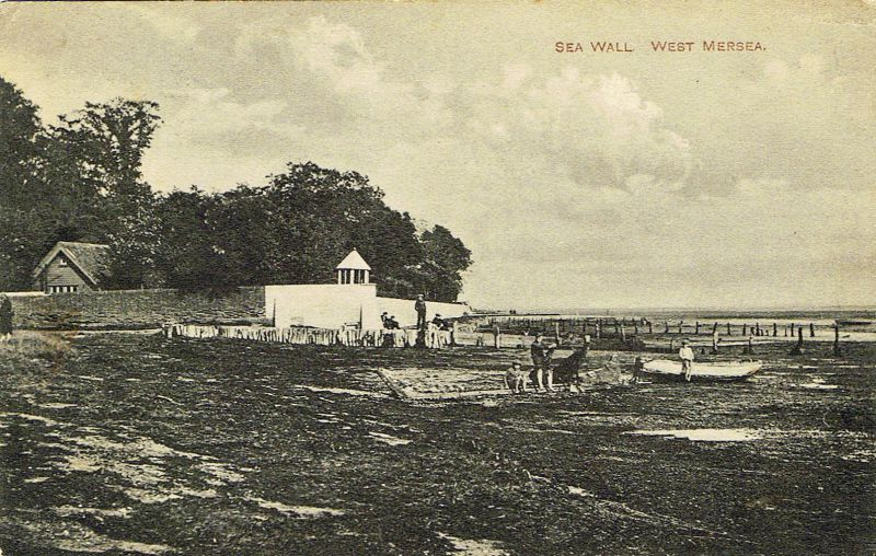 Sea Wall, West Mersea. Monkey House beach.