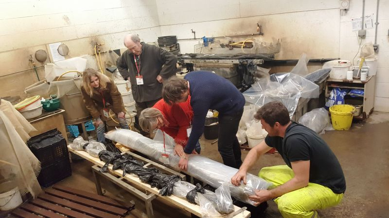 Board walk timbers found off Coopers Beach. Wrapping timber 3 at Museum of London Archaeology. Scale drawings were done and then they were sent to Portsmouth for preservation. They will return to Mersea for display in the Museum.