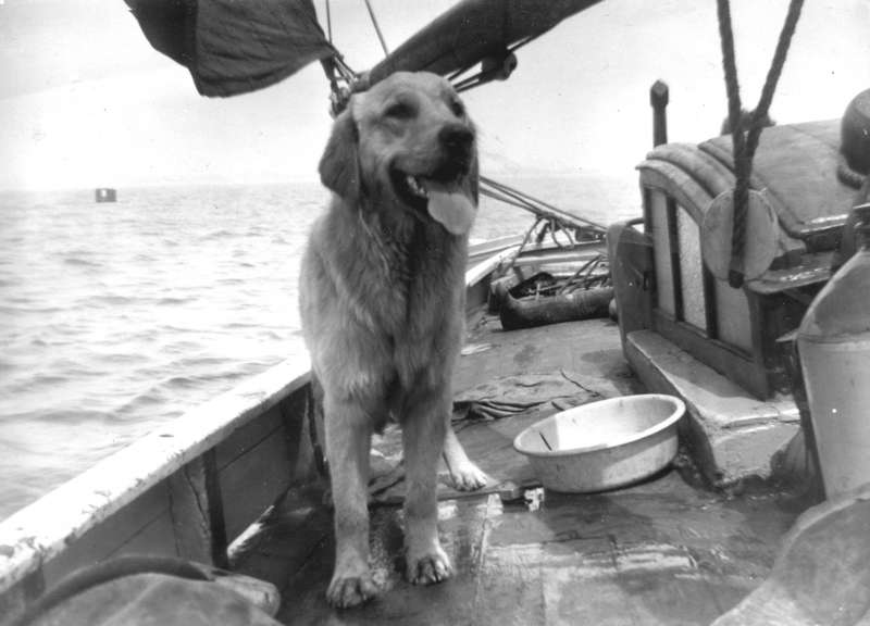 MAUD - the dog belonged to one of the Daniel family from Colchester. It had eaten a hole in the mainsail. 