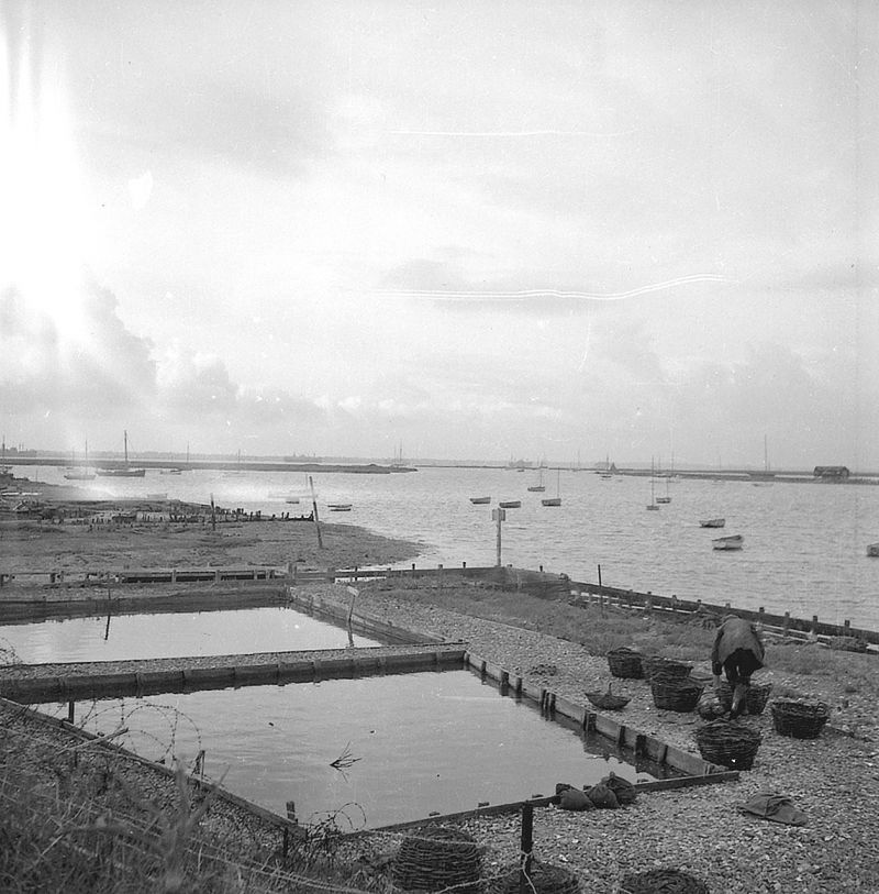 Ted Woolf oyster pits on Coast Road - just visible distant left is the laid up ship PHILOCTETES, which was in the Blackwater June 1946 to April 1948 