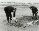 156. ID PP4_SKL_007 Police Sergeant Tony Butcher and Police Constable David Passfield recovering a skeleton found on the beach by Coopers Beach, East Mersea. The old chalets at ...