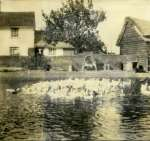 Moor Farm, Colchester Road, Peldon. At one time up to 500 Indian Runner Ducks were kept on the pond. It is now filled in.  FL03_012_001